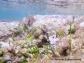 Cymodocea nodosa en el Chato