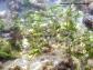 Cymodocea nodosa en fondo rocoso