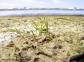 Cymodocea nodosa entre dos aguas