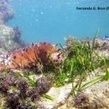 Cymodocea nodosa y Holoturia